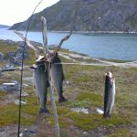 Enjoy the view at one of the best fishing spots in Greenland