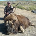 Musk ox trophy at extreme hunting outfitter in Greenland