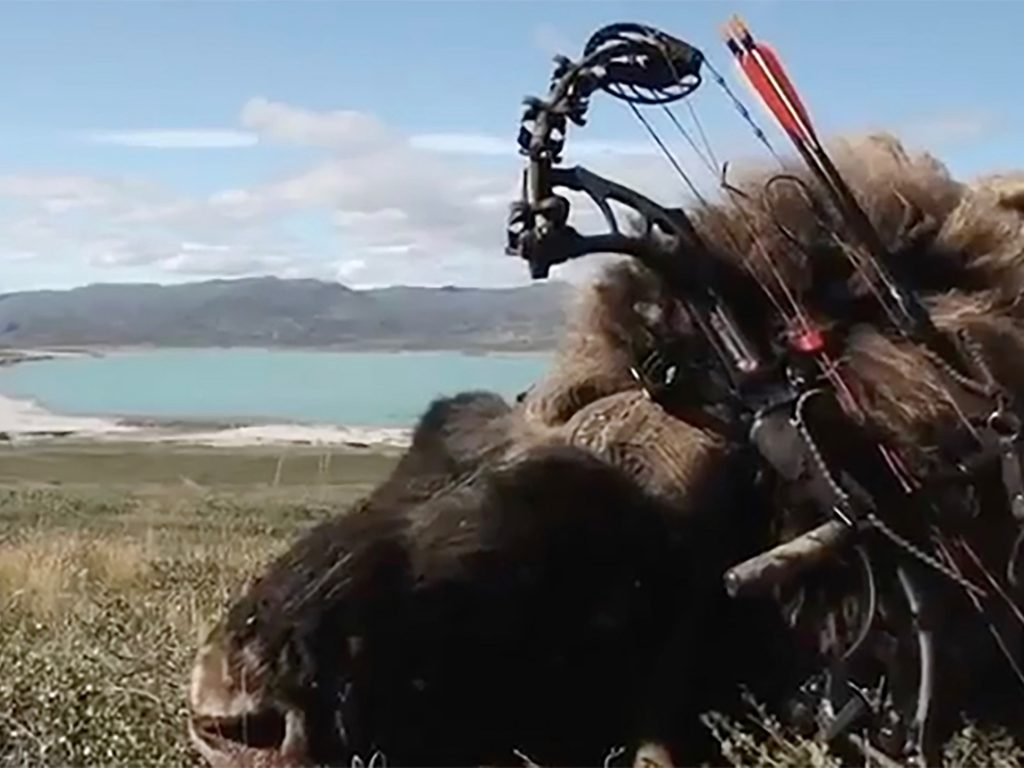 greenland is the place for extreme bowhunting